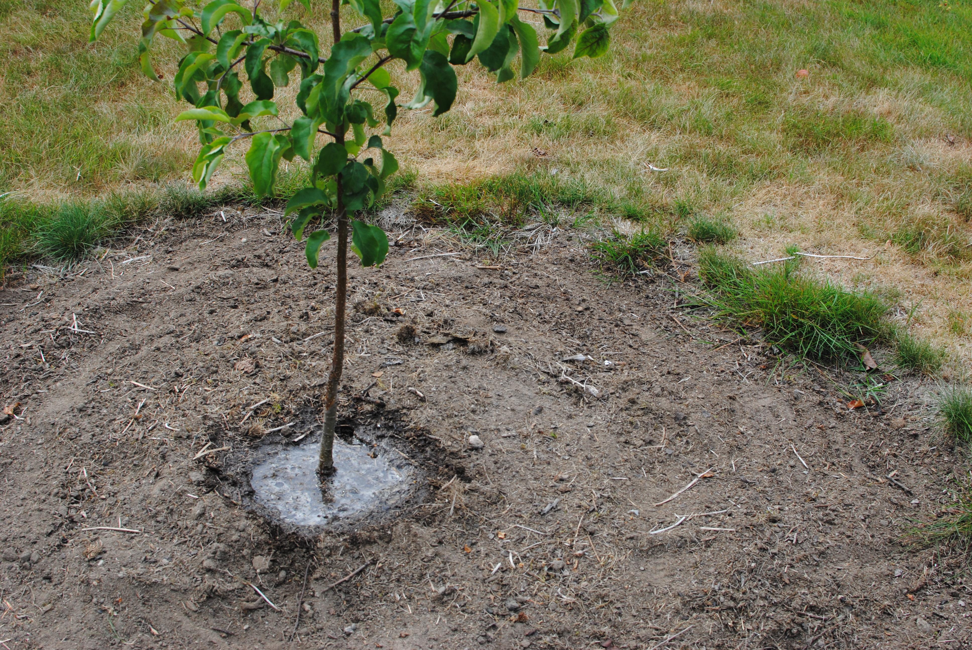 Omenapuun Suojaverkko