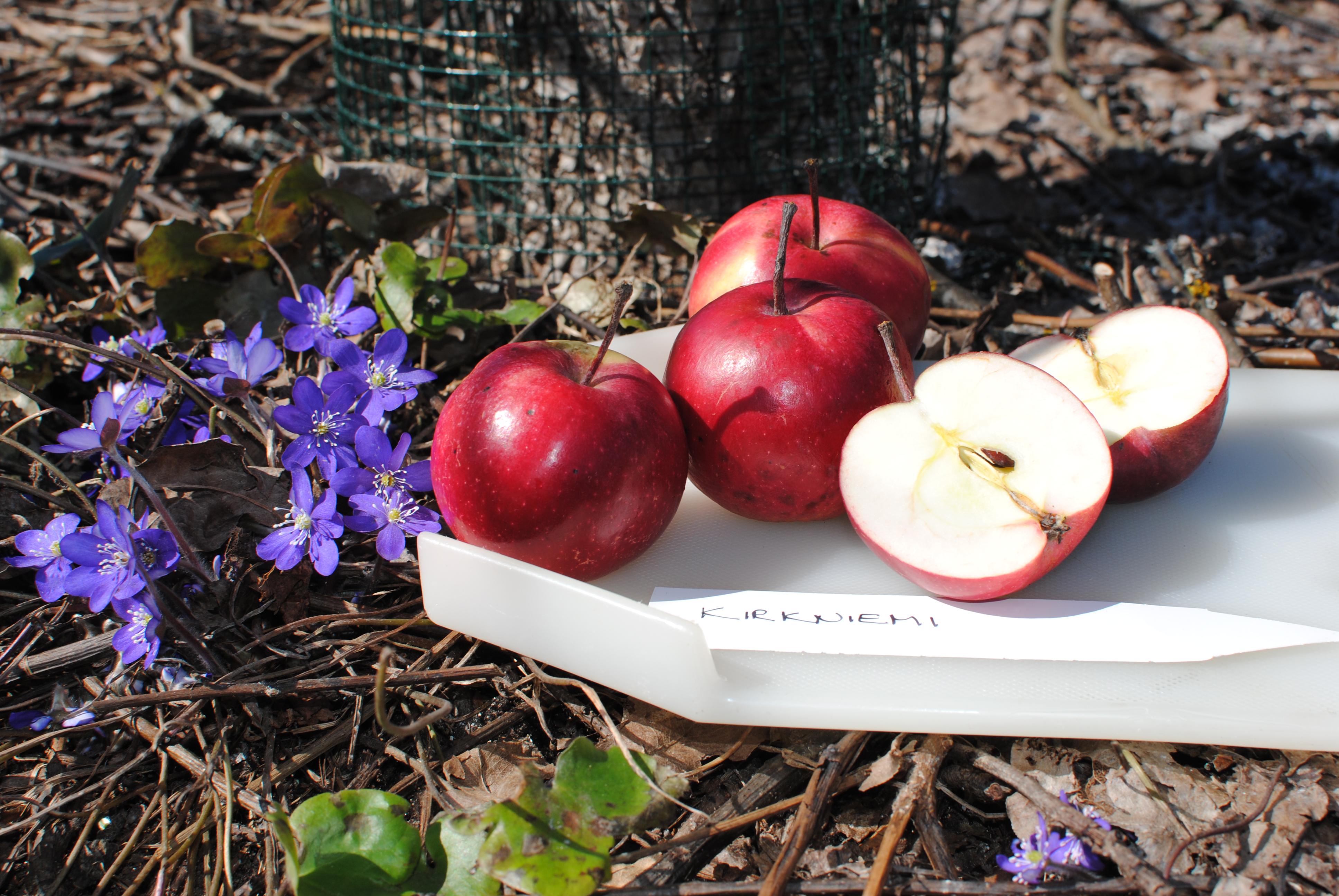 omenien säilytys kellarissa