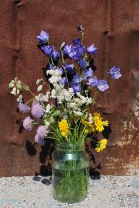 12. Kurjenkello, nurmikohokki, ruusuruoho, keltasauramo